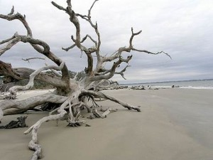 tn_driftwood_beach