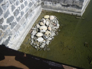 62-shells-in-the-moat-of-the-fort