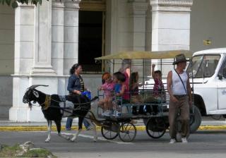 tn_505-goat-cart-rides