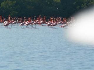 tn_188-flamingos