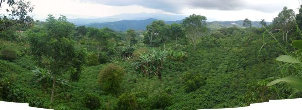182 coffee farm near maggies_thumb