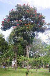 61 Blossoming Tree_thumb
