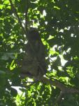 tn_136 Sloth