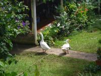 tn_257 Geese next door