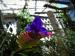 tn_100-a-PURPLE-flower