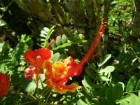 tn_181-Traveling-to-Baracoa-flower