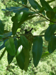 tn_300d-Humming-bird-nest