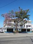 tn_348-Tree-in-Blossom-Santiago