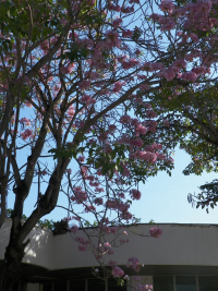 tn_434-Blossoms-near-the-Viazul-Station