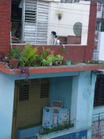 tn_447-Dogs-rule-the-roof