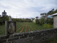 tn_42 field of crops