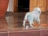tn_25 the Blue dog